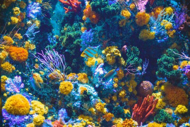 Müzik mercan resiflerini hayata döndürüyor