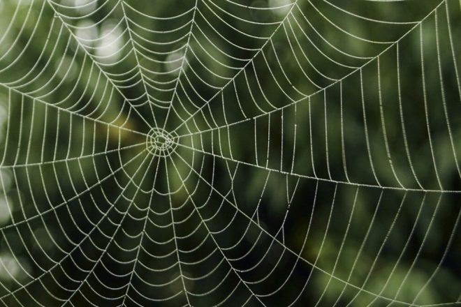 Örümcek ağının sesi yapay zeka sayesinde duyulabilir hale geldi